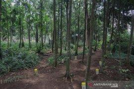 Hutan kampung di Kota Bogor berpotensi jadi sarana olahraga dan tempat wisata