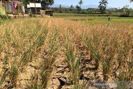 Pemkab Garut siap manfaatkan lahan tidur untuk tingkatkan produksi pertanian