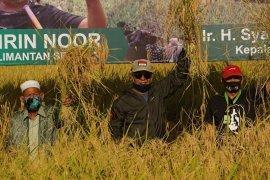 Produksi padi Kalsel capai satu juta ton hingga Agustus