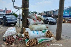 Ubikayu semakin laris di pasaran Kota Bogor