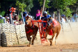 Bakorwil Pamekasan fasilitasi tes cepat COVID-19 peserta karapan sapi Piala Presiden