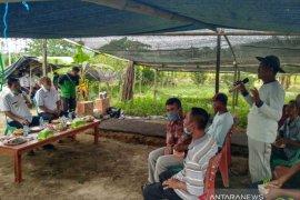Pemkab Bangka Tengah dorong poktan kembangkan tanaman hortikultura