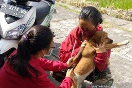 Distan Denpasar lakukan vaksinasi rabies secara kontinyu
