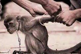 Komunitas pecinta satwa kecam sirkus jalanan topeng monyet