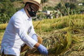 Metode jamu organik Biogro perkuat ketahanan pangan Jabar