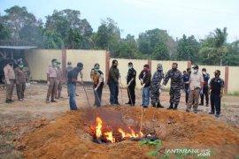 Karantina Pangkalpinang musnahkan 300 kilogram daging babi ilegal