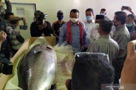 Menteri Edhy Prabowo lepas ekspor 2,22 ton tuna ke Jepang