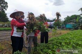 Bupati Belitung ajak petni wujudkan kemandirian pangan