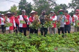 Bupati Belitung ajak petani wujudkan kemandirian pangan