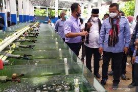 Edhy Prabowo tantang Pemkab/Pemkot di Maluku kembangkan tambak udang