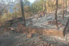 Puluhan rumah adat tak berpenghuni di Lembata terbakar