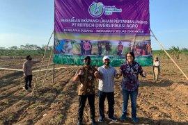 Reitech Diversifikasi Agro ekspansi lahan jagung 2.500 hektare di Subang