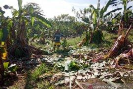 BKSDA sarankan Pemkab Nagan Raya bangun CRU atasi gangguan gajah