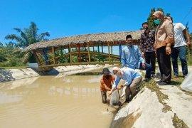 Regal Springs bantu warga Sumut 50.000 benih Tilapia