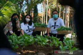 Wali Kota Denpasar lakukan panen perdana di kebun pekarangan rumah