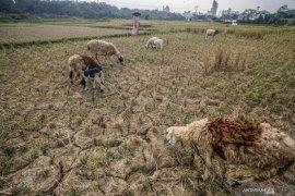 54.194 warga Bogor terdampak kekeringan