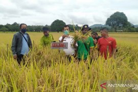 Kabupaten Landak dorong petani tanam padi unggul bersertifikat