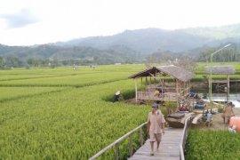 Mengintip hijaunya Kampung Jawa Desa Jaro