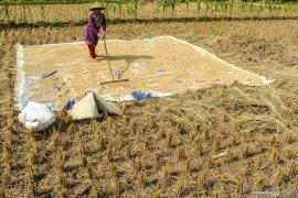 Setahun Jokowi-Ma'ruf, Pemerintah siapkan produksi pangan berkelanjutan