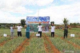 Bupati inginkan adanya orientasi bisnis pengembangan bibit bawang merah