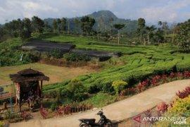 Potensi wisata Desa Tangguh COVID-19 di Andungbiru Probolinggo