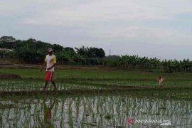 Dinas Pertanian Kabupaten Cirebon cetak 42 ribu kartu tani