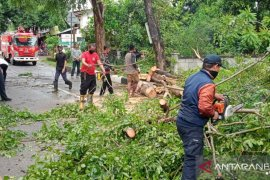 Pohon tumbang timpa kabel listrik-rumah di Aceh Besar