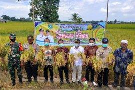 Yayasan H. Maming siap beli hasil panen padi milik petani di Tanah Bumbu