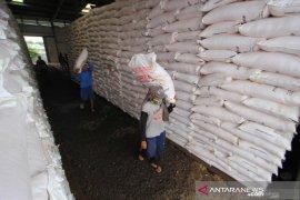 Petani jagung Aceh Tenggara kekurangan pupuk urea
