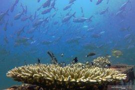 Biota laut pantai Bangsring