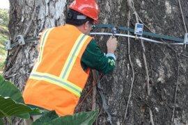 IPB latih puluhan calon 'dokter pohon'