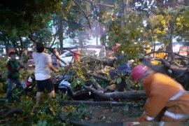 Hujan disertai angin kencang tumbangkan pohon besar timpa empat sepeda motor
