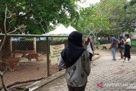 Pengunjung kebun binatang Jambi turun 75 persen