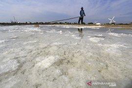 Produksi garam terkendala cuaca