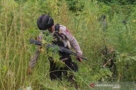 Bareskrim Polri musnahkan 10 hektare ladang di Aceh Besar