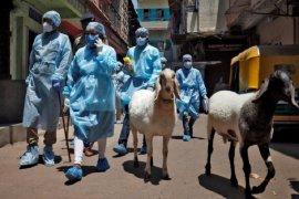 Kasus virus corona India lampaui 6 juta orang