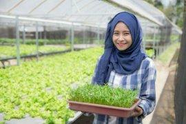 Distan dorong generasi milineal geluti usaha sektor pertanian