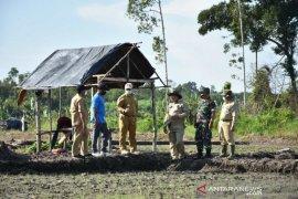 Pemprov Babel bagun 300 hektare sawah di Krakas