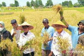 Bupati Bangka apresiasi petani tanam padi di bekas tambang