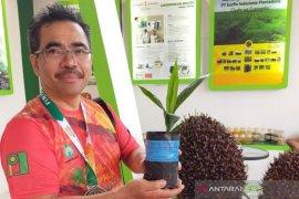 Label Palm Oil Free bukan berdasar regulasi pemerintah, tapi dilakukan swasta