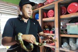Geger ular masuk kedalam rumah, warga diminta waspada musim penghujan