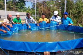 Tapin govt hands over 6,000 papuyu fish seeds to BUMDes