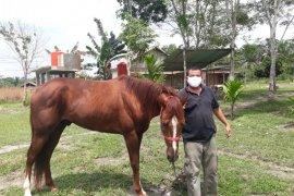 Ada Wisata Berkuda di Kecamatan Mestong