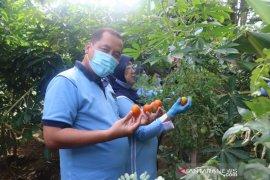 Lanud I Gusti Ngurah Rai dukung ketahanan pangan saat pandemi