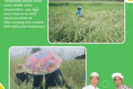 Cabup Banjar Rusli ingin pertahankan kabupatennya lumbung padi Kalsel