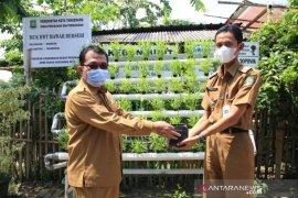 Pemkot Tangerang distribusi 1.000 batang pohon cabai ke warga di kecamatan