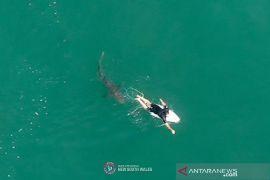 Tangan seorang bocah 12 tahun putus digigit hiu