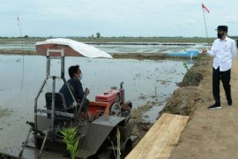 Other regions can emulate C Kalimantan food estate development: Jokowi