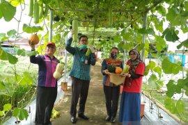 Pemprov Kalbar maksimalkan pengembangan hortikultura di tengah pandemi COVID-19