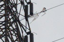 Aliran listrik di Pamekasan-Sumenep padam akibat layang-layang